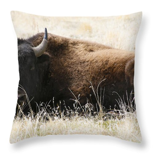 Utah Throw Pillow featuring the photograph American Bison 2 by Marilyn Hunt