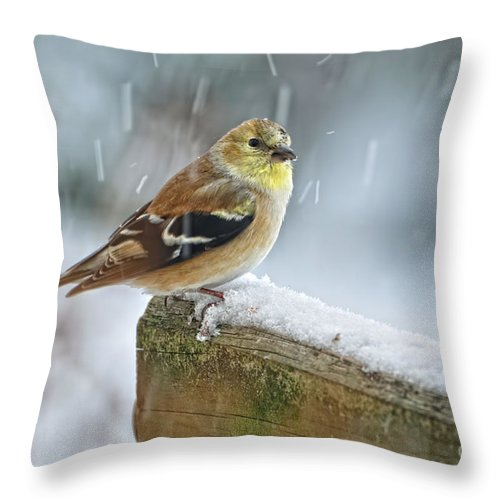 American Goldfinch Throw Pillow featuring the photograph American Goldfinch - Spinus Tristis by Pamela Baker