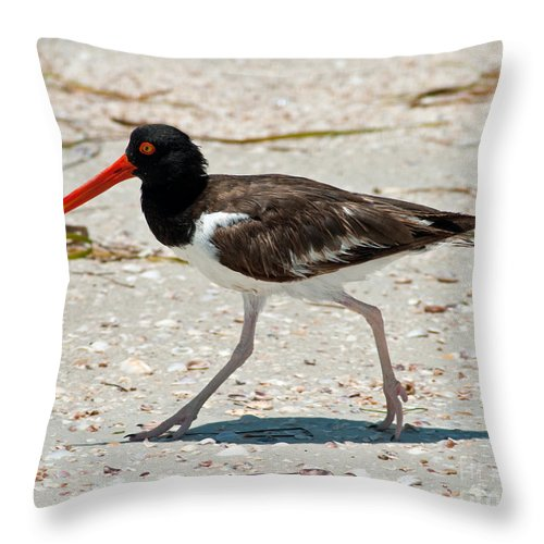 Birds Throw Pillow featuring the photograph American Oystercatcher by Stephen Whalen