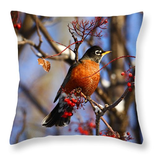 Alaska Throw Pillow featuring the photograph American Robin by Doug Lloyd