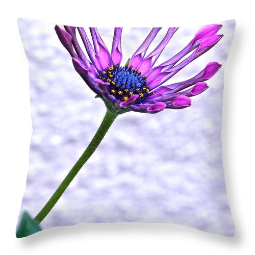 Osteospermum Throw Pillow featuring the photograph Amethyst Sapphire And Gold by Byron Varvarigos