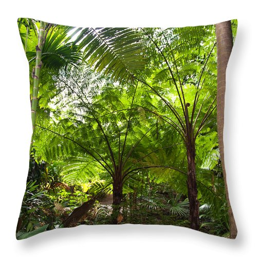 Tree Throw Pillow featuring the photograph Among The Tree Ferns by Bob and Nancy Kendrick