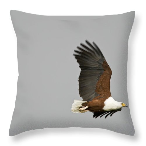 Africa Throw Pillow featuring the photograph An African Fish Eagle In Flight by Roy Toft