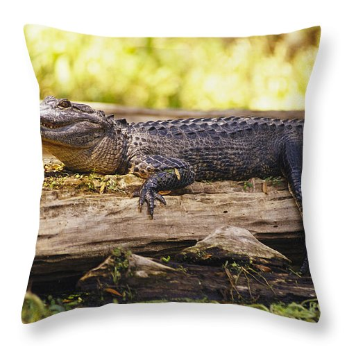 Animals Throw Pillow featuring the photograph An American Alligator On A Log by Richard Nowitz