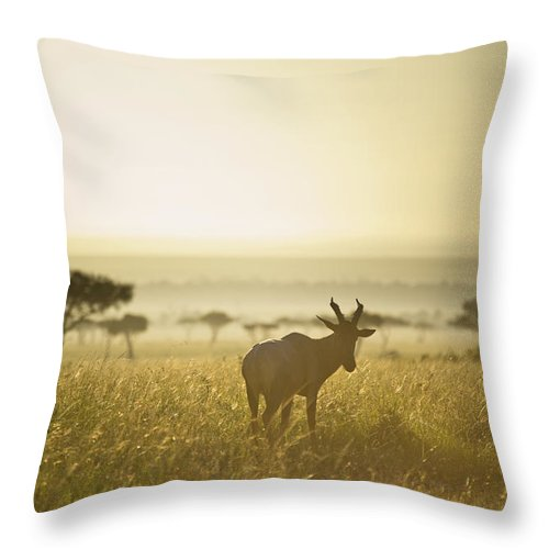 Animals In The Wild Throw Pillow featuring the photograph An Antelope Walks In The Grassland At by David DuChemin