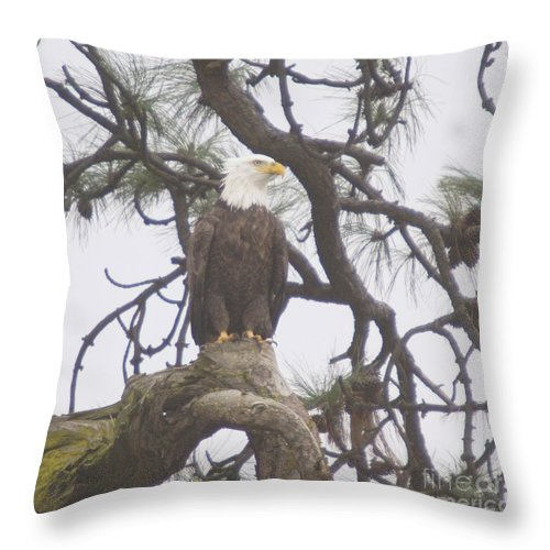 Eagle Throw Pillow featuring the photograph An Eagle Perched by Jeff Swan