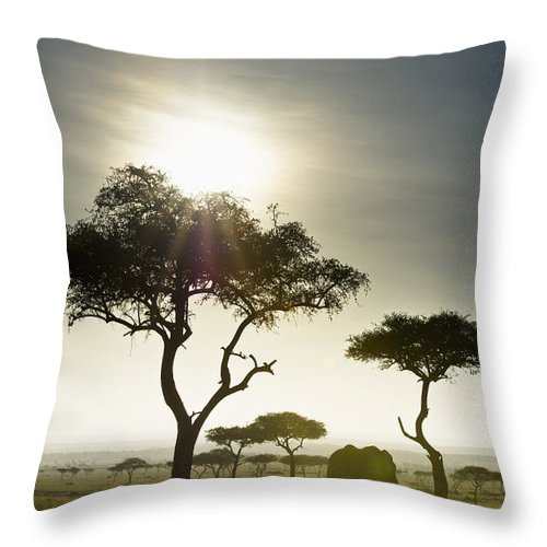 African Throw Pillow featuring the photograph An Elephant Walks Among The Trees Kenya by David DuChemin