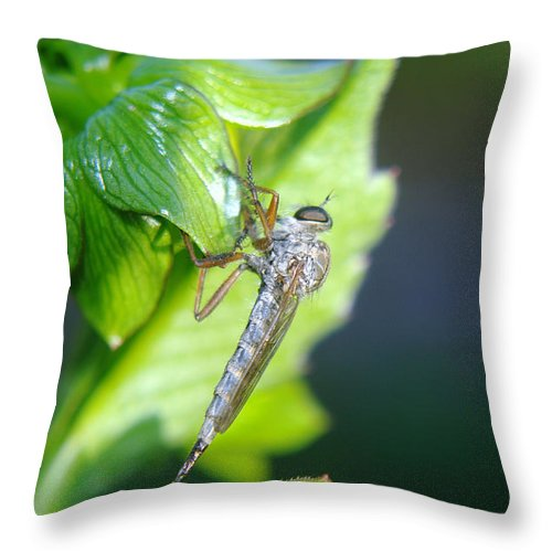 Insect Throw Pillow featuring the photograph An Insect Resting by Jeff Swan