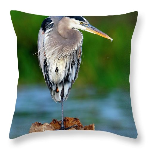 Heron Throw Pillow featuring the photograph Angry Bird by Bill Dodsworth