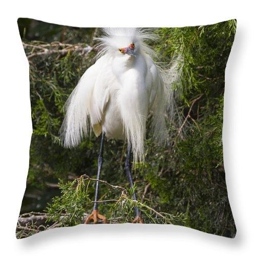 Snowy Egret Throw Pillow featuring the photograph Angry Bird Snowy Egret In Breediing Plumage by Bill Swindaman
