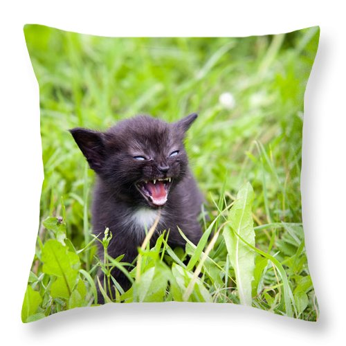 Adorable Throw Pillow featuring the photograph Angry Kitten by Michal Boubin