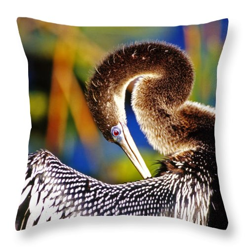 Anhinga Throw Pillow featuring the photograph Anhinga - Fs000043 by Daniel Dempster