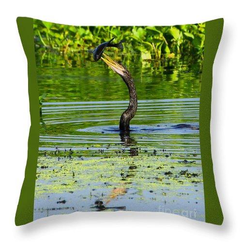 Anhinga Throw Pillow featuring the photograph Anhinga Stabs A Fish by Barbara Bowen