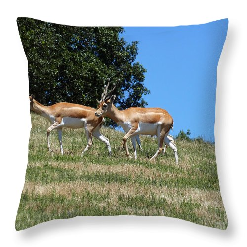 Antelope Throw Pillow featuring the photograph Antelope by Methune Hively
