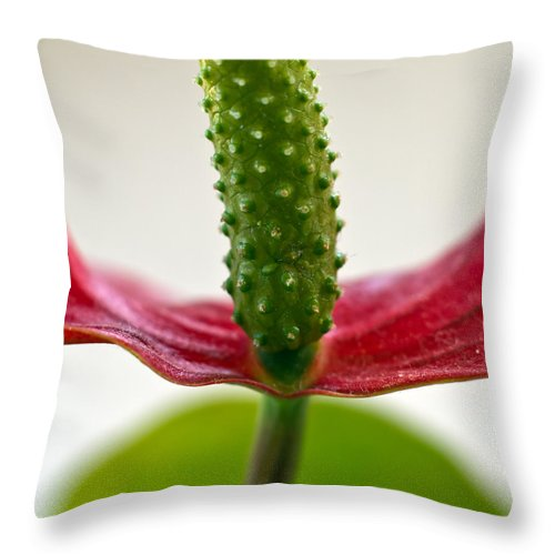 Abstract Throw Pillow featuring the photograph Anthurium by Stelios Kleanthous