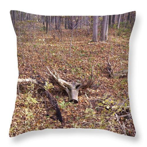 Tree Throw Pillow featuring the photograph Antler Log by Corinne Elizabeth Cowherd