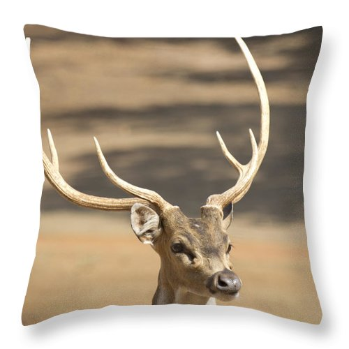 Deer Throw Pillow featuring the photograph Antlers by Douglas Barnard