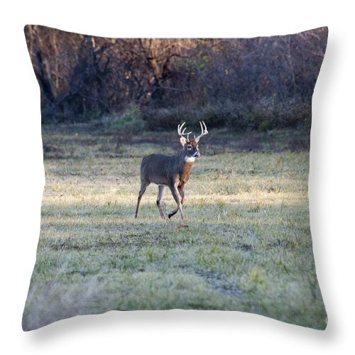 Deer Throw Pillow featuring the photograph Antlers In The Sun by David Arment