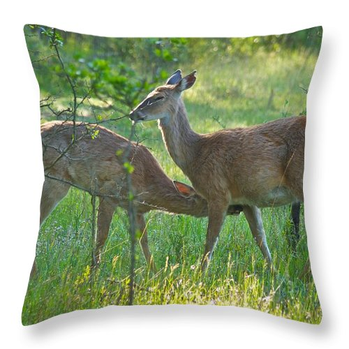 Animal Throw Pillow featuring the photograph Any Day Now by Michael Peychich
