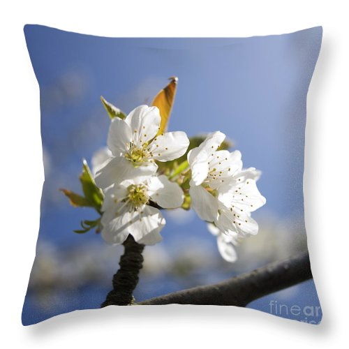 Trees Throw Pillow featuring the photograph Apple Blossom by Bernard Jaubert