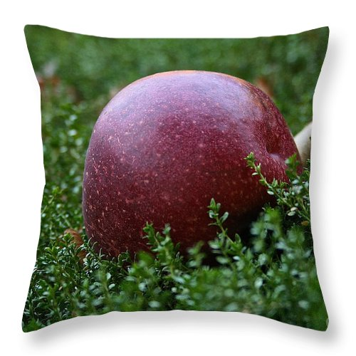 Outdoors Throw Pillow featuring the photograph Apple Gravity by Susan Herber