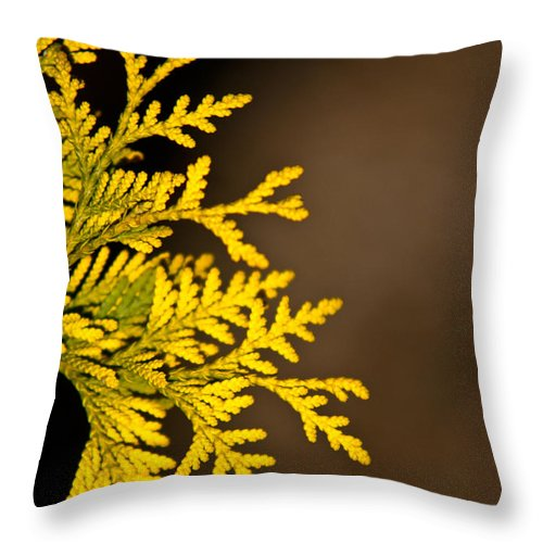 Notecard Throw Pillow featuring the photograph Arbovitae Fan 1 by Douglas Barnett