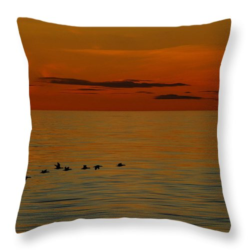 King Eider Throw Pillow featuring the photograph Arctic Dusk by Tony Beck