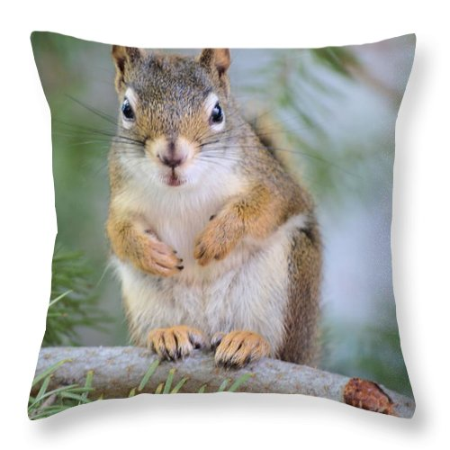 Chipmunk Throw Pillow featuring the photograph Are You Looking At Me by Tara Turner