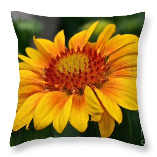 Plant Throw Pillow featuring the photograph Arizona Apricot by Susan Herber