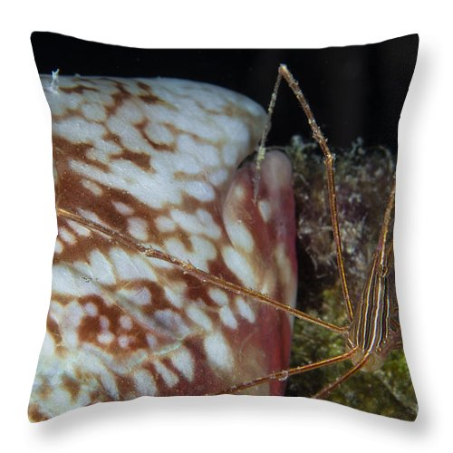 Parrotfish Throw Pillow featuring the photograph Arrow Crab And Parrotfish, Belize by Todd Winner