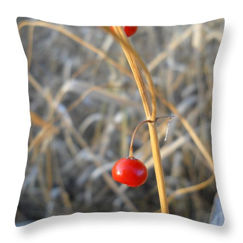 Asparagus Throw Pillow featuring the photograph Asparagus Berries by Kent Lorentzen