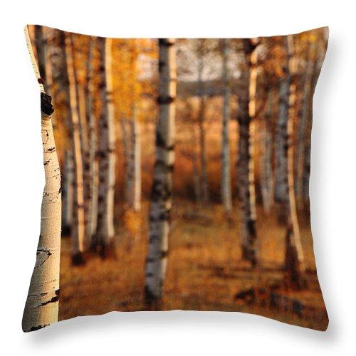 Aspens Throw Pillow featuring the photograph Aspen Amber by Tamara Brown
