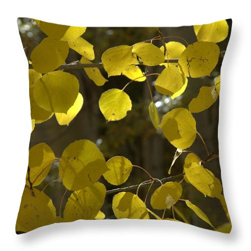 Autumn Throw Pillow featuring the photograph Aspen Glow by Jerry McElroy