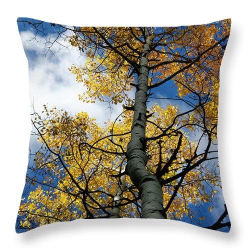 Photograph Throw Pillow featuring the photograph Aspen Gold by Vicki Pelham