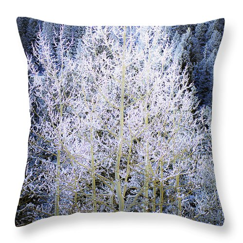 Trees Throw Pillow featuring the photograph Aspen Lace by Beth Riser