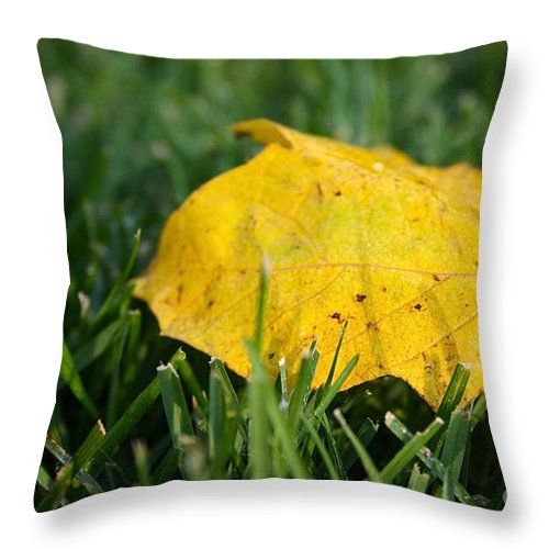 Outdoors Throw Pillow featuring the photograph Aspen Leaf by Susan Herber