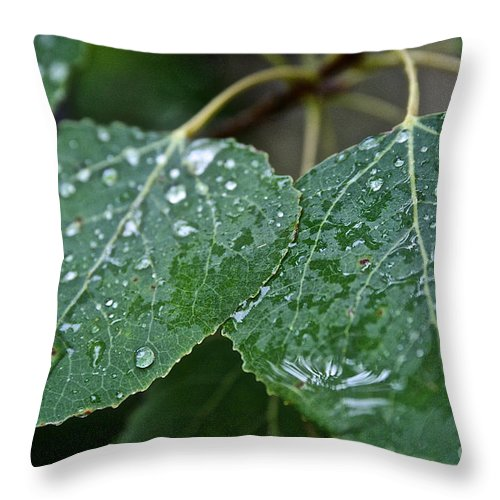 Outdoors Throw Pillow featuring the photograph Aspen by Susan Herber