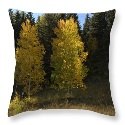 Fall Throw Pillow featuring the photograph Aspen Twins by Jerry McElroy