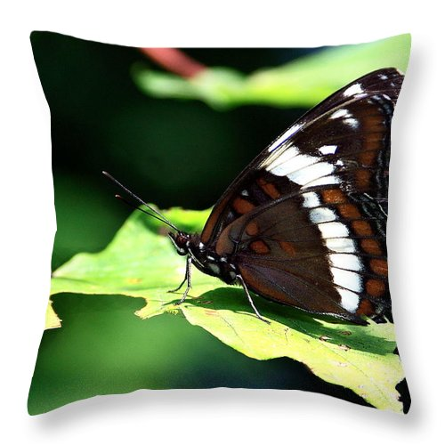 Butterfly Throw Pillow featuring the photograph At Rest by Burney Lieberman