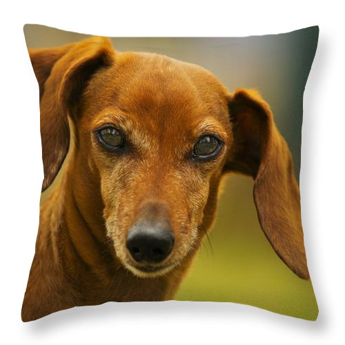 Dachshund Throw Pillow featuring the photograph Attitude by John Greaves