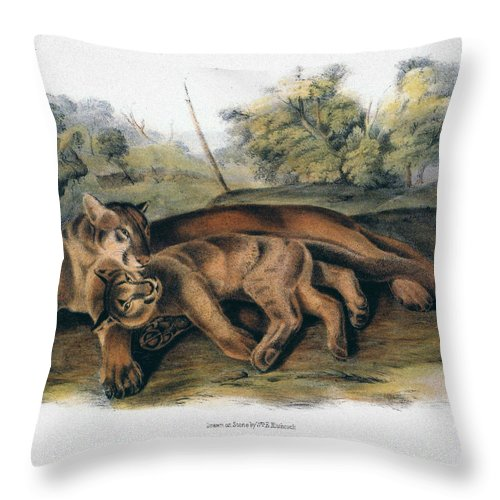 1844 Throw Pillow featuring the photograph Audubon: The Cougar by Granger