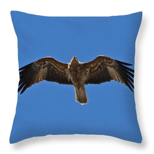 Australian Sea Eagle Throw Pillow featuring the photograph Australian Sea Eagle by Sean Foreman