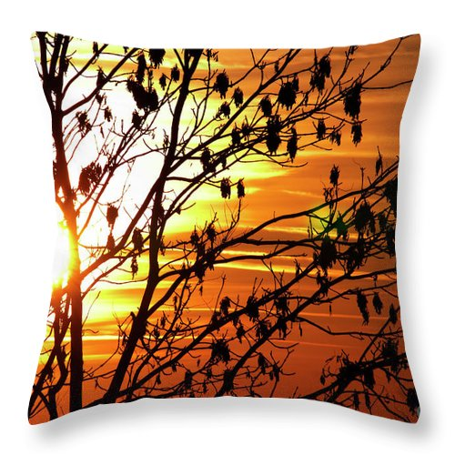 Autumn Throw Pillow featuring the photograph Autumn Abstract by Michal Boubin