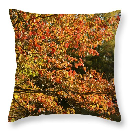 Autumn Colors In Pa Throw Pillow featuring the photograph Autumn Colors In Pa by Heinz G Mielke