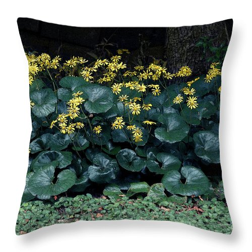 Flowers Throw Pillow featuring the photograph Autumn Flowers by Eena Bo