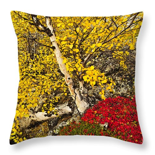 Tree Throw Pillow featuring the photograph Autumn In Finland by Heiko Koehrer-Wagner