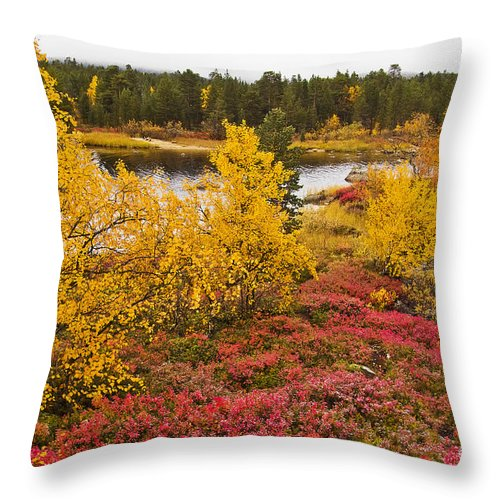 Tree Throw Pillow featuring the photograph Autumn In Inari by Heiko Koehrer-Wagner