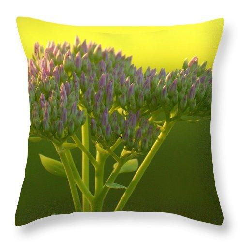 Sedum Throw Pillow featuring the photograph Autumn Joy Sedum With Spider by Mel Hensley