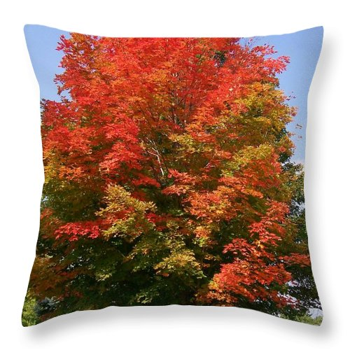 Photo Throw Pillow featuring the photograph Autumn Leaves by Barbara S Nickerson