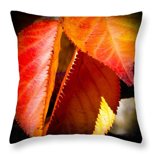 Leaves Throw Pillow featuring the photograph Autumn Leaves II by David Patterson